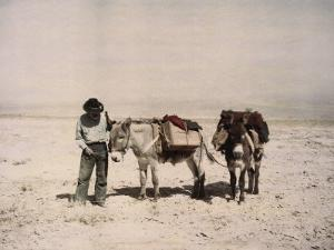 An Old Prospector with His Mules by B. Anthony Stewart