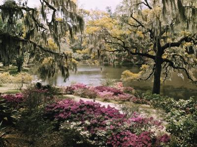 Blooming Shrubs and Trees Near the Waterside by B. Anthony Stewart