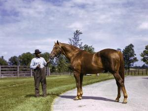 Champion Horse Man-O-War Poses with One of His Grooms by B. Anthony Stewart