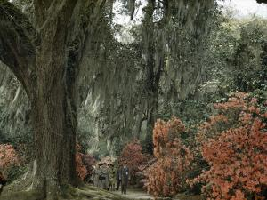 Live Oak Tree Draped with Spanish Moss Dwarfs Tourists Strolling Path by B. Anthony Stewart
