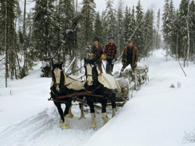 Loggers Haul Freshly Cut Timber on a Horse-Drawn Sleigh by B. Anthony Stewart