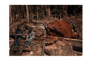 Lumbermen Conversing Among Fallen Giant Redwood Trees by B. Anthony Stewart