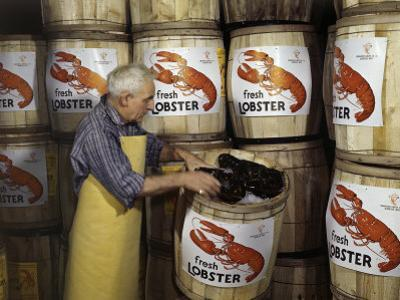 Man Packs Live Lobsters on Ice in Barrels for Shipping