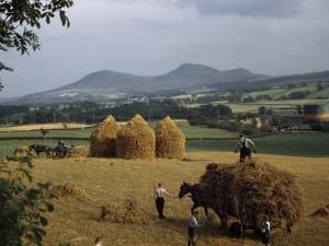 Men Harvest Oats Below Eildon Hills by B. Anthony Stewart
