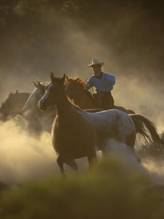 Cowgirl Rounding-Up Wild Horses, OR by B & C Gillingham