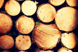 Raw De-Barked Pine Wood Logs in a Lumber Staging and Storage Yard by B-D-S