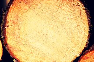Wood Logs by B-D-S