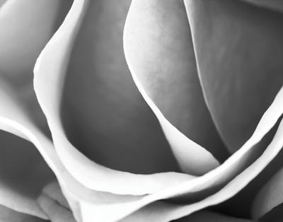Rose Petal Detail by B. Marcela