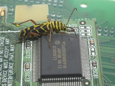 Locust Borer, Megacyllene Robiniae, on a Printed Circuit Board Next to an Integrated Circuit