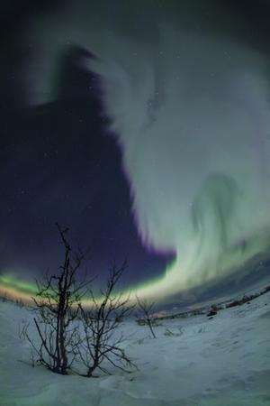 A Grand Display of Aurora Borealis across the Sky over Snowy Winter Landscape by Babak Tafreshi