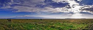 A Herd of African Elephants in a Grassland Landscape with Mount Kilimanjaro in the Distance by Babak Tafreshi