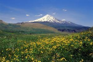 A Meadow of Wildflowers in Spring, with Mount Damavand, Alborz Mountains in the Distance by Babak Tafreshi