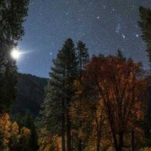 A Moonlit Autumn Night with Constellation Orion Above Colorful Aspen Trees by Babak Tafreshi