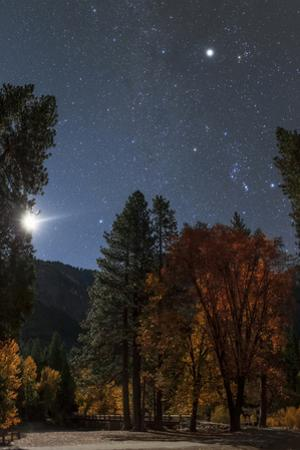 A Moonlit Autumn Night with Orion over Aspen Trees. Higher Up Is Planet Jupiter, in Taurus by Babak Tafreshi