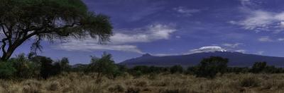A Moonlit Night with Mount Kilimanjaro, an Acacia Tree, and Giraffes in the Background by Babak Tafreshi