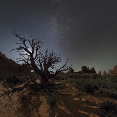 A Starry Night of Arches National Park with a Tree, Rock Formations and the Milky Way by Babak Tafreshi