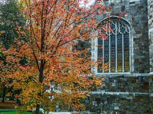 A Sugar Maple Tree in Autumn Hues on the Grounds of Bates College by Babak Tafreshi