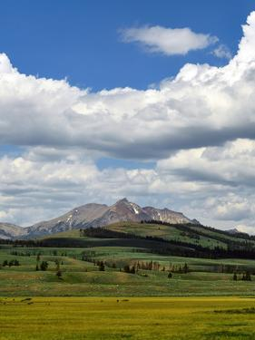 A Summer Landscape in Yellowstone National Park, with Mountains, Meadows, and Fluffy Clouds by Babak Tafreshi