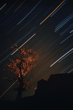 A Tree Is Back-Lit by Village Lights Against Colorful Star Trails of the Constellation Orion by Babak Tafreshi