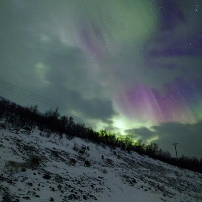 Aurora Borealis Above Reindeer in a Snow-Covered Winter Landscape by Babak Tafreshi