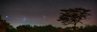 Bright Star Canopus, Large and Small Magellanic Clouds, Red and Green Airglow over Acacia Trees by Babak Tafreshi