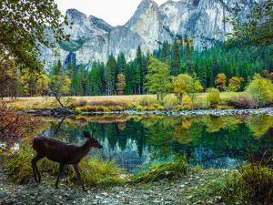 Colorful Trees, Rugged Mountains and a Browsing Deer in a Scenic Autumn Landscape by Babak Tafreshi