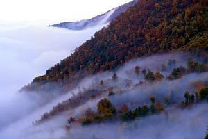 Fog Reaches the High Altitudes of the Dohezar Forest of Iran by Babak Tafreshi