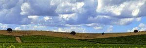 Landscape of Vineyards and Hill-Top Trees under a Sky with Fluffy White Clouds by Babak Tafreshi