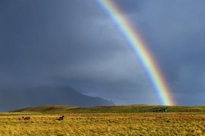 Rainbow Above Icelandic Horses by Babak Tafreshi