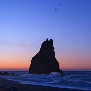 Sea Birds Flying Near Sunrise over Massive Basalt Sea Stacks known as Reynisdrangar Near Vik by Babak Tafreshi