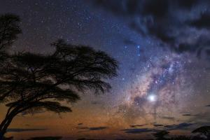 The Milky Way and Planet Venus in the Evening Sky over a Silhouetted Acacia Tree by Babak Tafreshi
