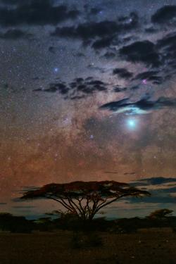The Milky Way and Planet Venus over an Acacia Tree in the Evening by Babak Tafreshi