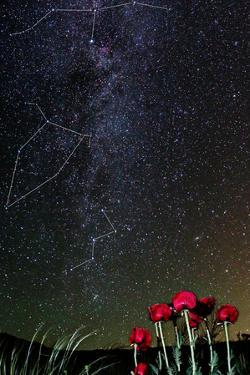 The Milky Way Appears in the Night Sky Above Wild Poppies on Mount Damavand by Babak Tafreshi