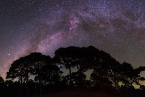 The Milky Way in Constellations Cygnus and Cepheus, over a Silhouetted Pine Forest by Babak Tafreshi
