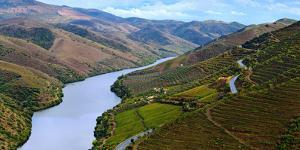 Vineyards Along Douro River, Near Coa Valley by Babak Tafreshi