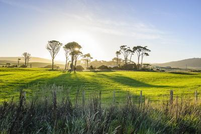https://imgc.allpostersimages.com/img/posters/backlit-trees-in-green-fields-the-catlins-south-island-new-zealand-pacific_u-L-PQ8M4B0.jpg?artPerspective=n