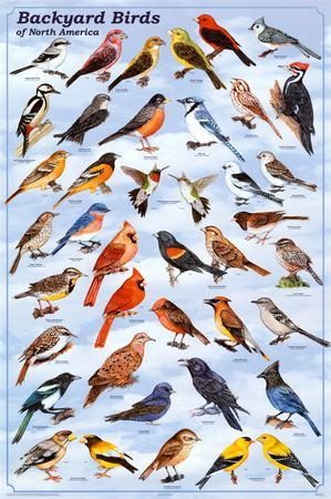 https://imgc.allpostersimages.com/img/posters/backyard-birds-educational-science-chart-poster_u-L-F57ORF0.jpg?p=0
