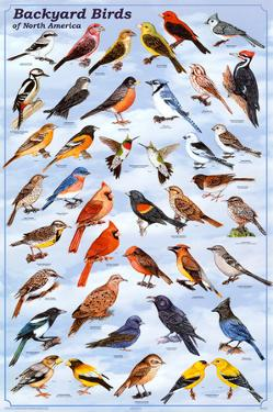 Backyard Birds Educational Science Chart Poster