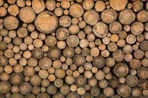Big Wall of Stacked Wood Logs Showing Natural Discoloration by badboo