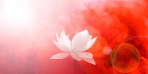 Lotus in Flames by Bahman Farzad
