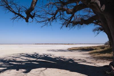 https://imgc.allpostersimages.com/img/posters/baines-baobabs-kudiakam-pan-nxai-pan-national-park-botswana-africa_u-L-PQ8NYB0.jpg?p=0
