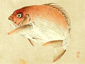 Bairei Gadan - Red Snapper by Bairei Kono