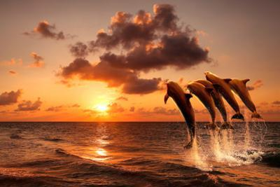 Beautiful Sunset with Dolphins Jumping by balaikin2009