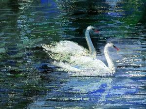 Two White Swans On Lake by balaikin2009