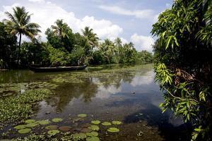 Backwaters of Kumarakom, Kottayam, Kerala, India, Asia by Balan Madhavan