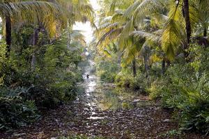 Backwaters, Vaikom, Kerala, India, Asia by Balan Madhavan