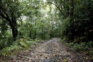 Path in Shola Forest, Eravikulam National Park, Kerala, India, Asia by Balan Madhavan