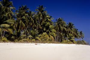 Sandy Beach and Palm Trees, Bangaram Island, Lakshadweep Islands, India, Indian Ocean, Asia by Balan Madhavan