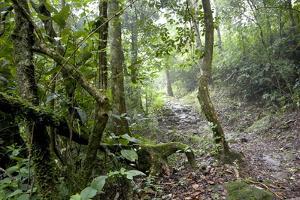 Shola Forest Interior, Eravikulam National Park, Kerala, India, Asia by Balan Madhavan