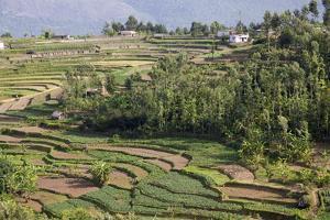Terrace Farming, Marayoor, Idukki District, Kerala, India, Asia by Balan Madhavan
